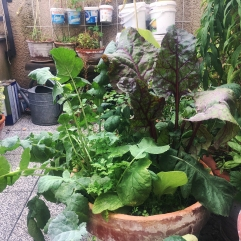 Gemüsemixtopf auf Bokashidüngung